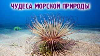 Морские чудеса   Чудеса природы - растение закапывающееся в песок