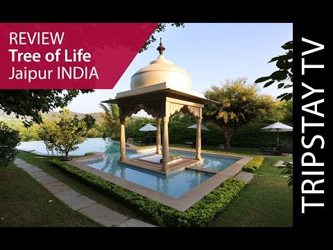Tree of Life Jaipur by Tripstay TV  | Hotel review