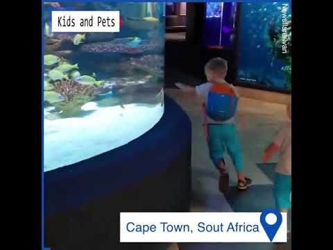 This Fish Is Playing Chase With A Kid!
