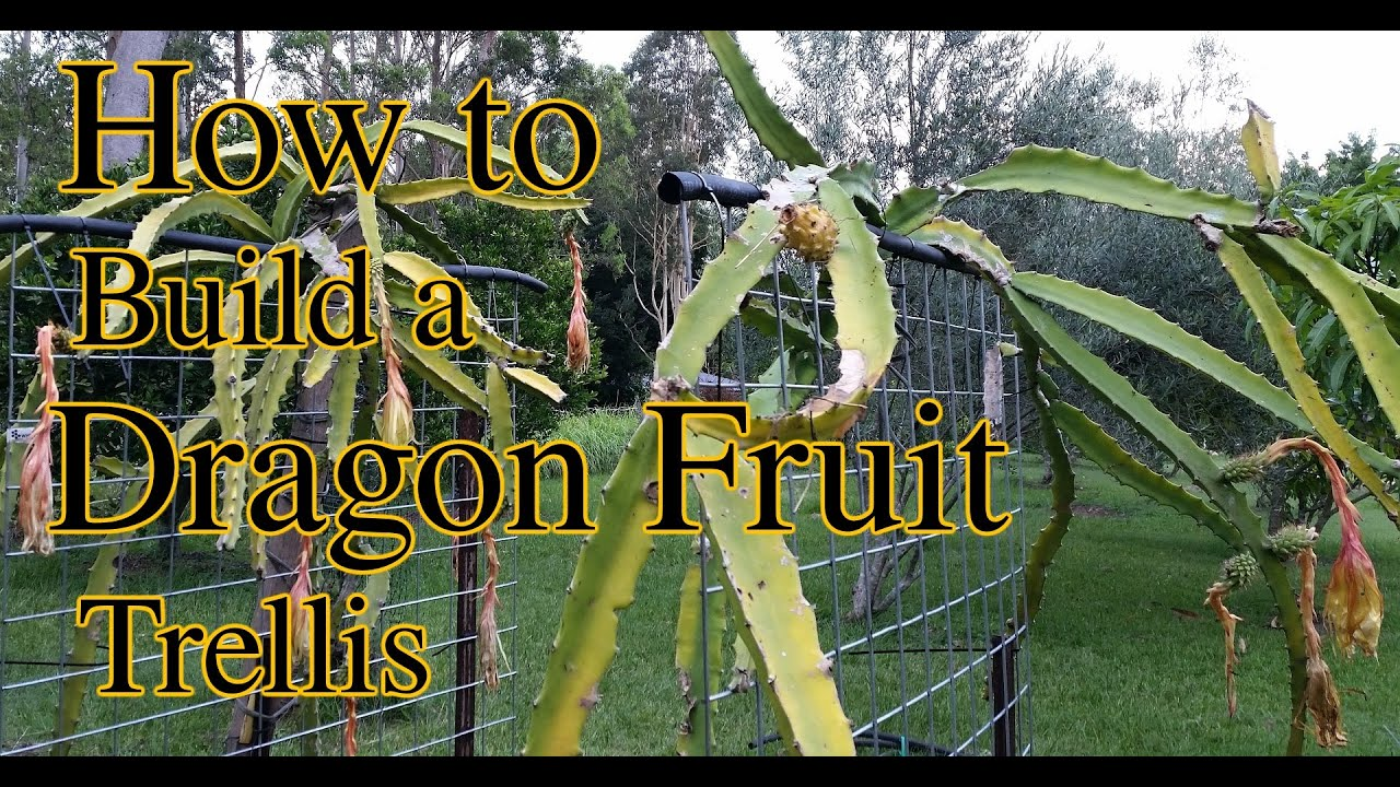 How To Build A Dragon Fruit Pitaya Trellis