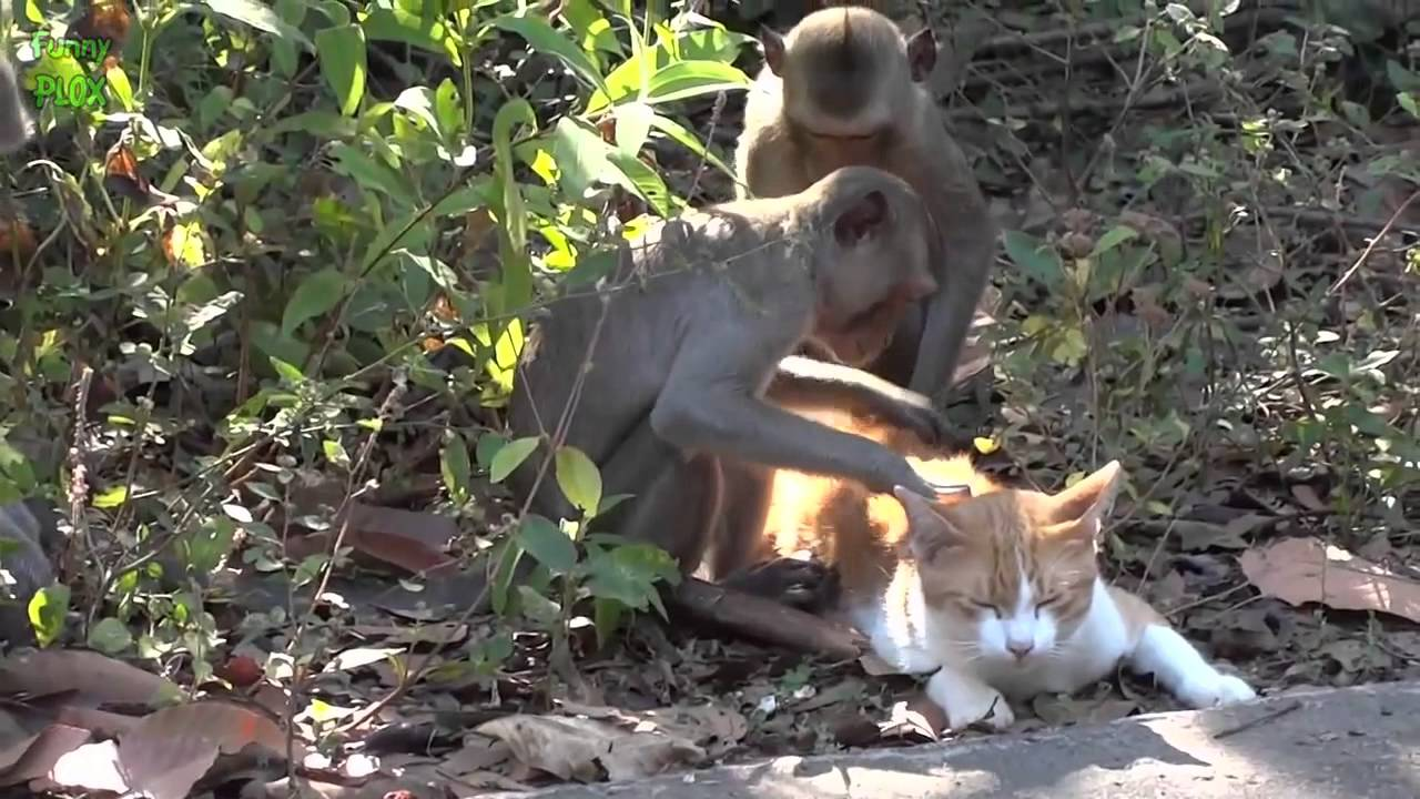 Animal Odd Couples Youtube funny unlikely animal odd couples compilation - youtube