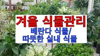 식물 겨울나기 (베란다 식물/따뜻한 실내식물)구분하기