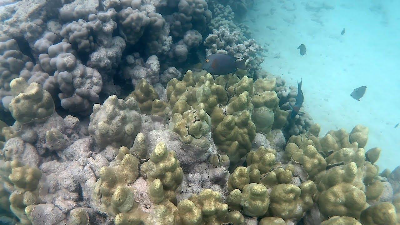 Snorkeling At Lanikai Beach Kailua Oahu Hawaii