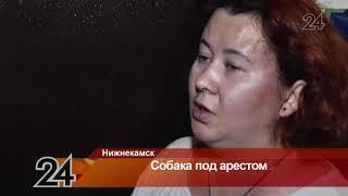 В Нижнекамске после ареста мужчины его собака рискует погибнуть голодной смертью