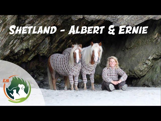 Shetland - Albert & Ernie