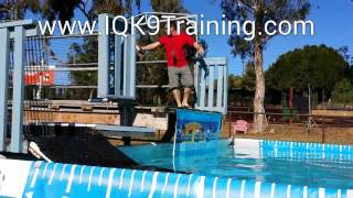 Iq K9 Training | Dogs Having Fun | 11 Year Old Dog Dock Diving And Lovin' It