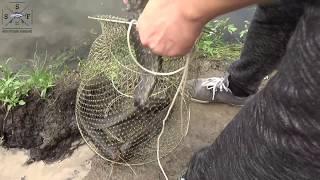 Ловля сома на р. Десна.  Выезд 28-29.07.18 / отличная рыбалка!