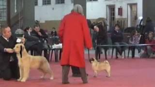 """""""perros En Acción"""" Lomas De Zamora Kennel Club"""