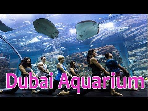 Dubai Aquarium – one of the world's largest indoor aquariums