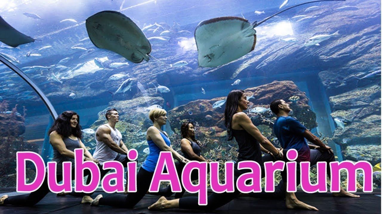 Dubai Aquarium One Of The World S Largest Indoor