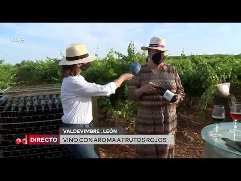 Vídeo | La DO León muestra sus vinos y divulga el 'madreo' en el espacio 'España directo' de La 1 de TVE
