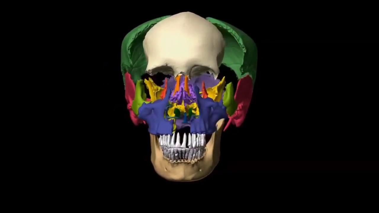 Presentation: Maxillary sinus floor augmentation.