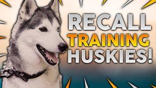 SIBERIAN HUSKY TRAINING! Recall Training With Your Siberian Husky!