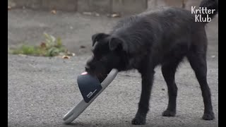Stray Dog Becomes A Shoe Thief For A Special Reason | Kritter Klub