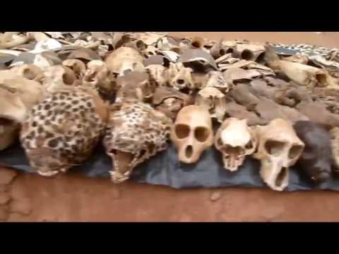 Feira da Magia Negra   no Togo, Africa, Mercado Vudu no Togo   bruxos, caveiras e poções magicas