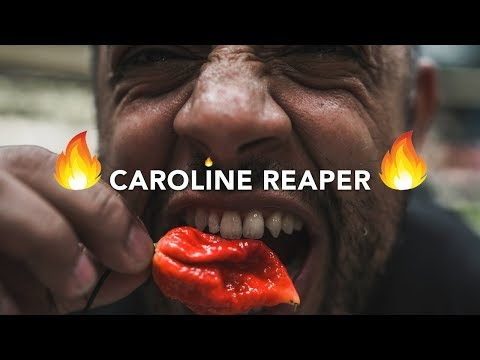 We eat the CAROLINA REAPER extremely dangerous and burning experience of the worlds hottest chili🌶️