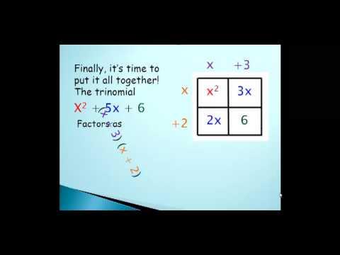 Punnett Squares Math - YouTube