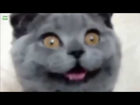 Crazy Cats & Crazy Dogs make Funny Faces   Funny Pets Compilation of the Funniest Animals