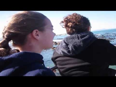 Shark Diving in South Africa: The Bussey Family Rite of Passage