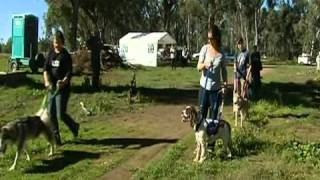 Northern Victorian Sled Dog Club Training 2011 - Win News