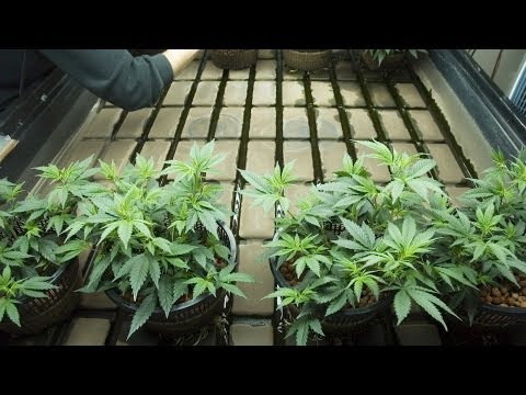 Federal Law Against Marijuana | Marijuana