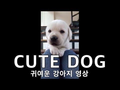 baby dogs , cute dog , cutie dog healing time 강아지영상