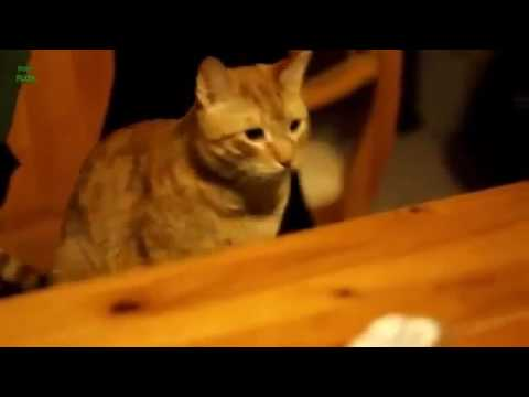 Funny Cats Knocking Things Over Compilation