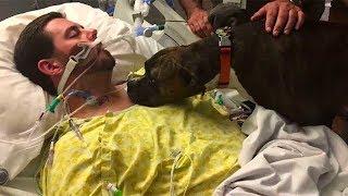 Собака пришла в больницу, чтобы попрощаться…