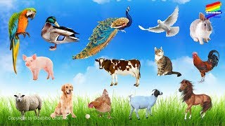 Dạy bé tập đoán tên các con vật | Động vật trong nông trại | Những vật nuôi quen thuộc