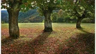 Reflexiones de vida - Tres pequeños arboles - Mariano Osorio