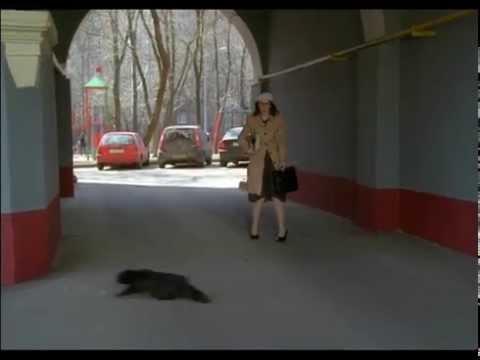 """Ералаш №241 """"Чёрная кошка"""""""