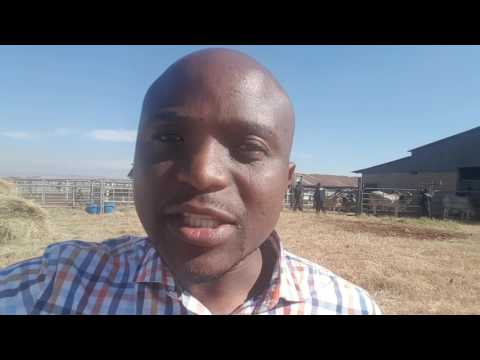 Cattle Auction Sale Process - Introduction