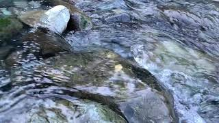 Enjoy the Relaxing Sounds of a River