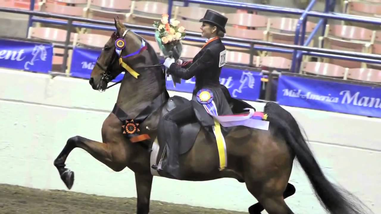 2012 Usef Junior Equestrian Of The Year Hunter