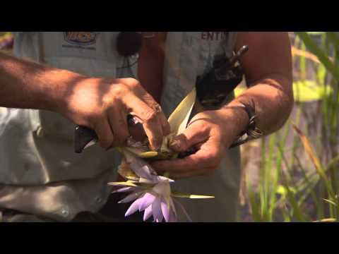 swamp-bush-tucker-►-all-4-adventure-tv