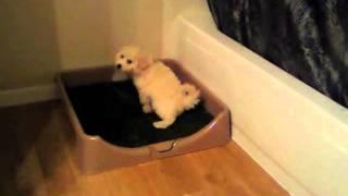 Rascal Dog Litter Box Testimonial