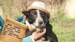 собаки для охраны Харьков