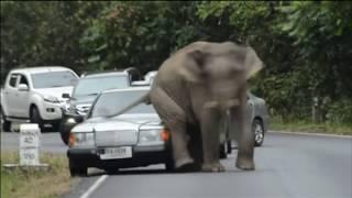 Нападение слонов в Таиланде
