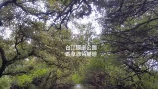 台江國家公園 四草綠色隧道  Sicao Mangrove Green Tunnel,  Taijiang National Park, Tainan city, Taiwan.