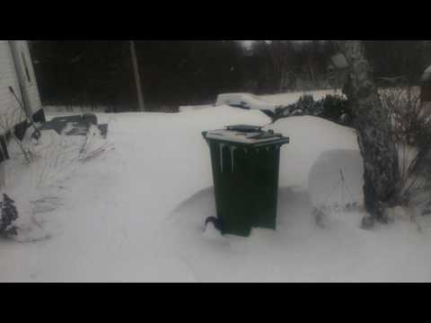 After the Blizzard: Pictou County Nova Scotia Feb/2017