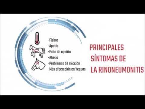Brote de Rinoneumonitis en España