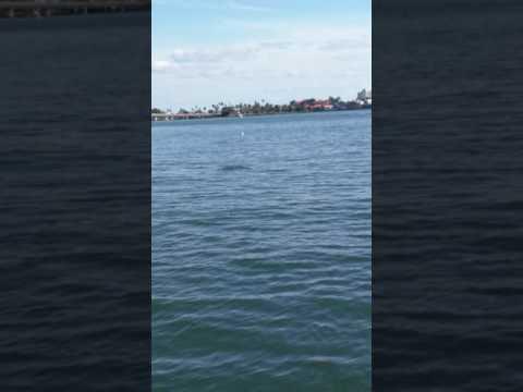 Dolphins on jet ski Tampa bay