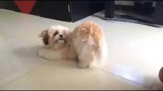 「お尻はどこ?」と聞かれると「はいどうぞ!」と真摯な瞳で見せてくれる犬の愛くるしさ