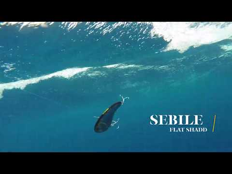 How Lures Swim: Sebile Flat Shadd