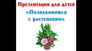'Познакомимся с растениями', презентация для детей