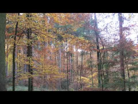 Le jardin du luxembourg lyrics