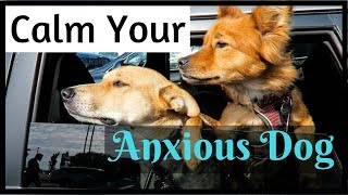 How to Keep Your Dog CALM with Nutri-Vet Pet-Ease | InRuffCompany.com