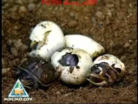Tập tính sinh sản ở động vật - Lớp 11B8