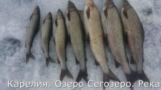 Карелия  Озеро Сегозеро  Ловля хариуса зимой