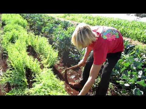 Master Gardeners Dylan & Jaren's organic farm Kauai Hawaii.MOV